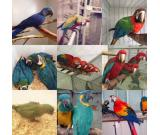 Parrots,ostrich, chicken chicks and Fertile eggs for sale