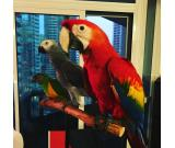 ACQUIRE EXOTIC PETS ONLINE – PARROTS AND KITTENS: BUY NOW
