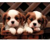 All puppy breeds, young and healthy  now available at very cheap rates