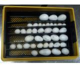 Candled tested fertile macaw parrot eggs