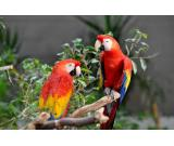 Macaw birds for sell