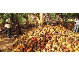 we deal with and supply cocoa and cocoa products worldwide