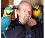 Weaned macaw parrots for sale