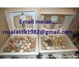 FERTILE MACAW PARROT EGGS FOR SALE