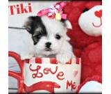 Well trained Maltese puppies for Adoption