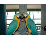 BLUE AND GOLD MACAW PARROTS CALL OR TEXT