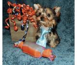 Cute yorkie puppies for sale here asap.