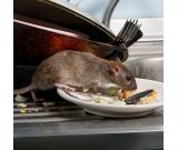TechSquadTeam offers you Best Rodent Control Services