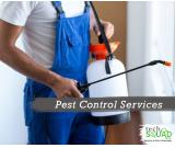 Find Affordable Pest Control Service in Bangalore with TechSquadTeam