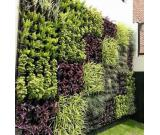 Outdoor Vertical garden services in Noida