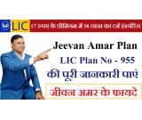 Buy LIC Jeevan Amar Policy 955 | Most Popular Term plan