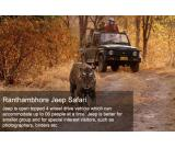 Ranthambore Online safari Booking | Ranthambore national park safari booking