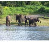 Jaldapara Wildlife Sanctuary Is a Haven for Wildlife Such As the Elephants