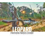 Leopard Exhibit Design for Mumbai Zoo India