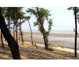 Investment Assistance at the Coastal Areas of West Bengal