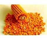 Low Price Best Maize/Corn - Animal Feed