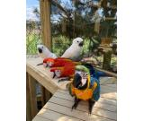 Beautiful parrot birds and parrots eggs for sale