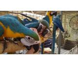 Beautiful and playful Macaw parrots and fertile parrots egg available