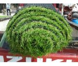 Humayun Interiors Best Artificial Grass Available For Sale in Pakistan