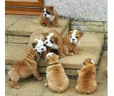 Cute Adorable Bulldogs ready for adoption
