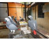 Fertile Fresh Parrot Eggs And Birds For Sale