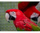 Available Fresh Fertile Parrots Eggs  And Babies Parrots
