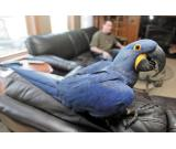 Macaw,Cockatoo,African Grey and other parrots and Fertile Eggs For sale