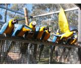 Buy Exotics Cubs, Kittens and Birds with us