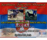 Serbian tricolor hounds