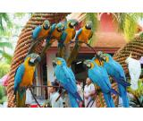 Macaws  Parrots Species available  for sale