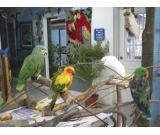 Open your own Pet exotic Birds Shop now in UAE.