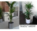 INDOOR OFFICE PLANTS, POTS AND MAINTENANCE O553862762