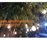 Rental Lights for events, wedding parties