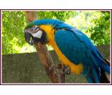 Macaw Parot ready for adoption