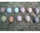 we have fresh and fertile parrot eggs for sale>skype:mosascenter