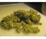 buy high quality OG Kush Grape Ape, Headband,Purple Kush,Snow White Feminized,