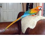 parrots and parrot eggs of all species available for sale