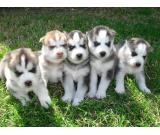 CUTE puppies for rehoming