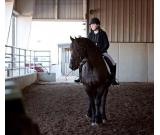 This is a seven year old dream Friesian