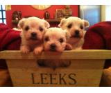 Available Beautiful Maltese puppies now for sale.(407) 901-7067