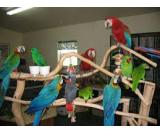 Parrots of various species available for good and caring families.