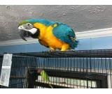 Williams macaws pet's services