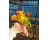 Jenday conure parrot to a good home.
