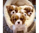 Cute charming lovable puppies