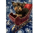 available lovely Yorkie comes with all shots and vet check am health examined
